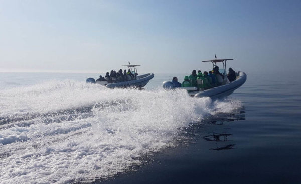 speed boats tour from split blue cave